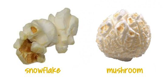 popcorndotorg popcorn shape